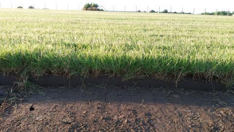 Travnjak ili tepih trava?